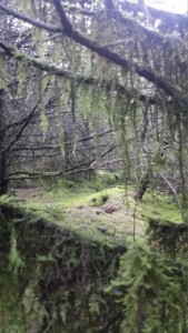 Moss hangs from trees like green beards.