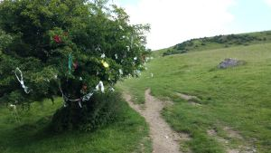 Fairy Tree on the way up to Loughcrew.