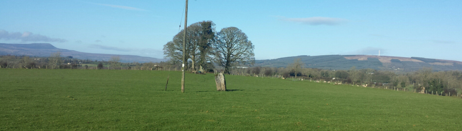 Lone standing stone on the plain of Magh Slecht, Co Cavan.