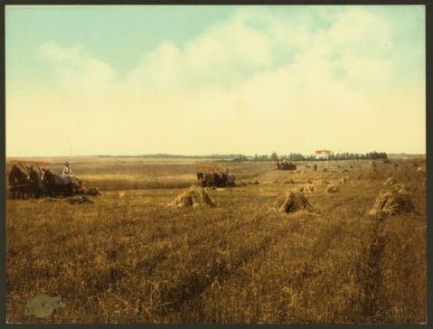 A harvest in South Dakota in 1898